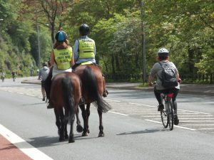 Passing horses on a bike, being a polite cyclist